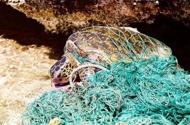 Plastics in the Oceans